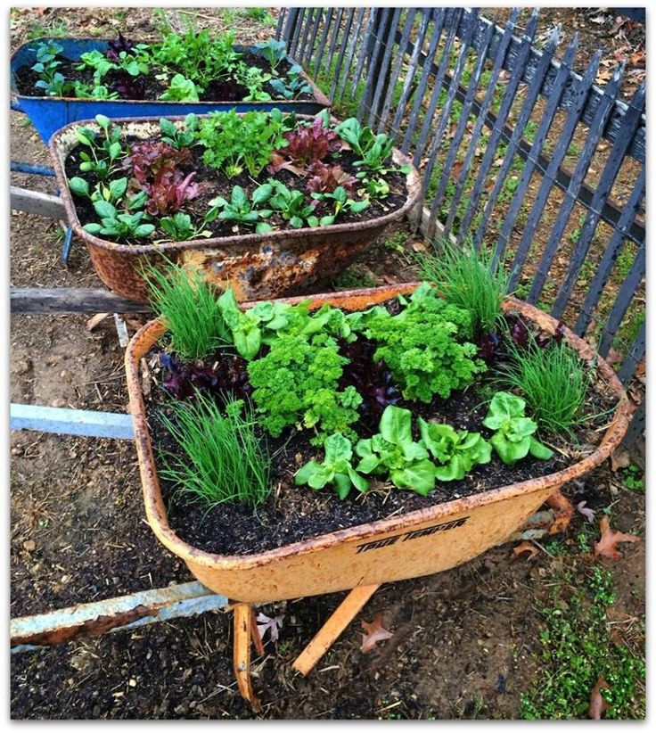 gardening tips and design ideas15