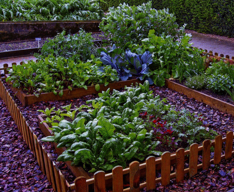 gardening tips and design ideas5