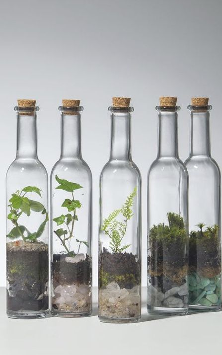 Diy Terrarium With Glass Bottles And Jars My Desired Home