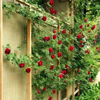 42 Ideas for small gardens - Balconies